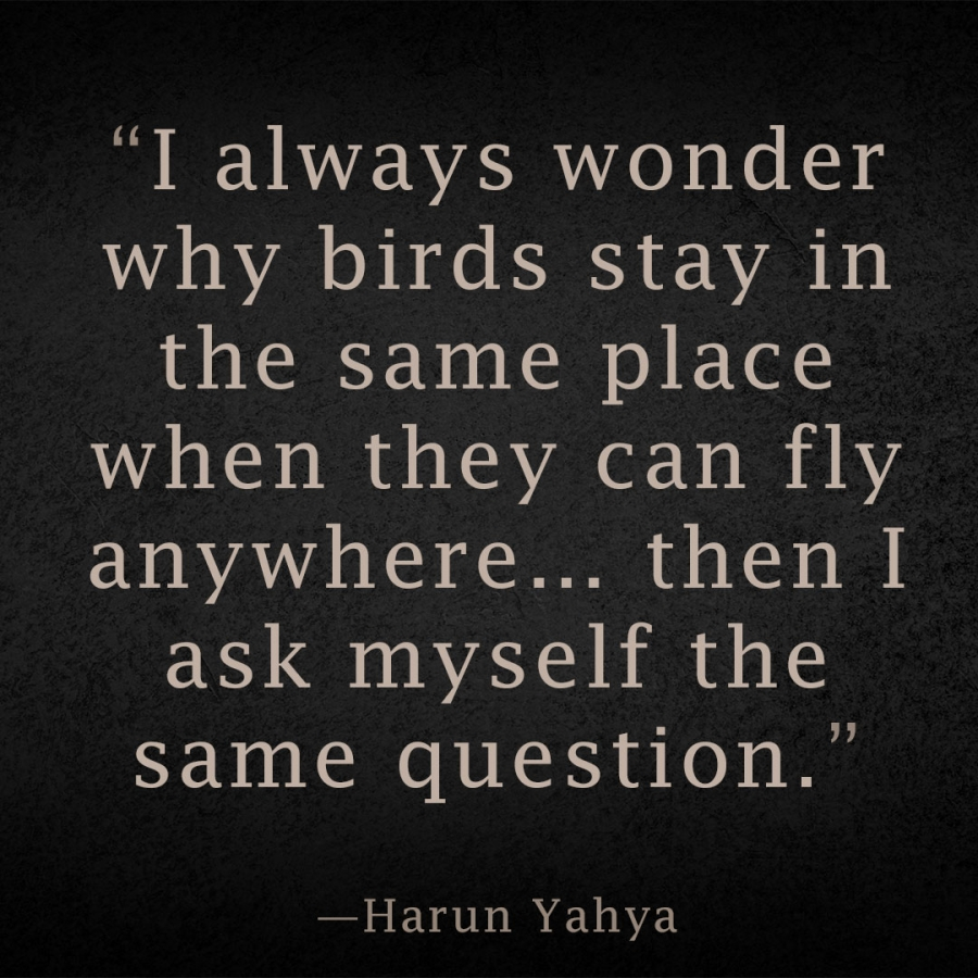 I always wonder why birds stay in the same place when they can fly anywhere - then I ask myself the same question. Harun Yahya